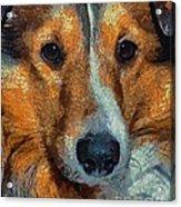 Lassie - Rough Collie Acrylic Print