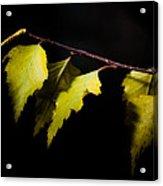 Last Autumn Gifts Acrylic Print