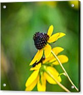Last Blooms Of Summer Acrylic Print