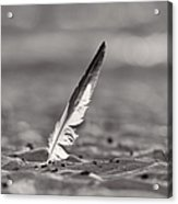 Last Days Of Summer In Black And White Acrylic Print