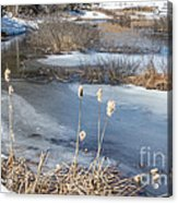 Last Days Of Winter Acrylic Print