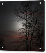 Last Light Acrylic Print by Ella Char