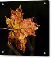 Last Maple Leaf Acrylic Print