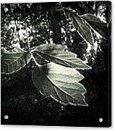 Last Rays II Acrylic Print by Jessica Myscofski