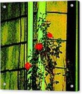 Last Roses Of The Season Acrylic Print