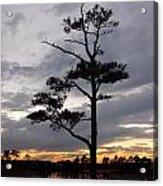 Last Tree Standing Acrylic Print