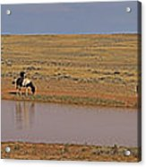 Late Afternoon At The Water Hole - 20x90 Acrylic Print
