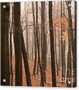 Late Autumn Beech Acrylic Print