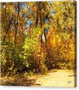 Late Autumn Colours Acrylic Print
