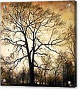 Late Autumn Acrylic Print