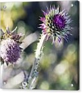Late Bloomers Acrylic Print by Dana Moyer