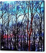 Late Cold Afternoon Acrylic Print by Jose Lopez