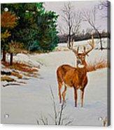 Late Season -droopy Ear Acrylic Print