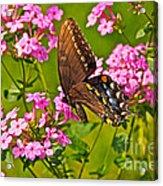 Late Summer Color Acrylic Print