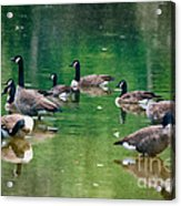 Late Summer Gathering Acrylic Print