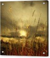 Late Summer Sun Through The High Grass Acrylic Print