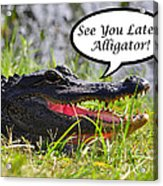 Later Alligator Greeting Card Acrylic Print
