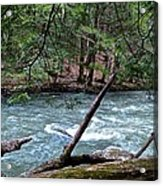 Laurel Hill Creek Hemlock Overlook Acrylic Print