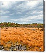 Laurel Summit State Park Bog Acrylic Print