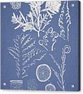Laurencia Concinna And Hypnea Musciformis Acrylic Print