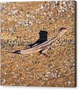 Lava Lizard Acrylic Print