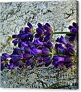 Lavender On White Stone Acrylic Print