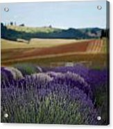 Lavendar Fields Forever Acrylic Print by Mamie Gunning