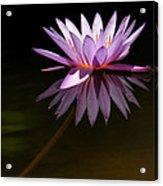 Lavendar Reflections Acrylic Print