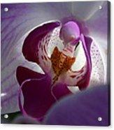 Lavendar World Acrylic Print