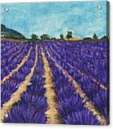 Lavender Afternoon Acrylic Print