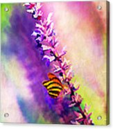 Lavender And Butterlies Acrylic Print