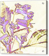 Lavender And Gold Acrylic Print