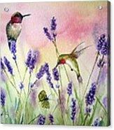Lavender And Hummingbirds Acrylic Print