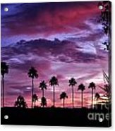 Lavender And Pink Acrylic Print