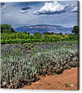 Lavender And Sunflowers Acrylic Print