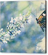Lavender And The Butterfly Acrylic Print