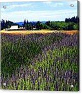 Lavender Barn Acrylic Print by Mamie Gunning