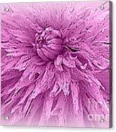 Lavender Beauty Acrylic Print