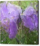 Lavender Blue Iris Garden Acrylic Print