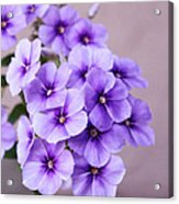 Lavender Dream Acrylic Print by Cathie Tyler