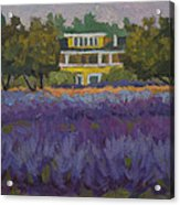 Lavender Farm On Vashon Island Acrylic Print