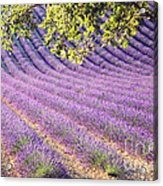 Lavender Field In France Acrylic Print
