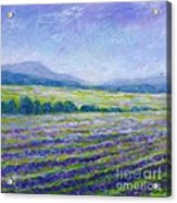 Lavender Field In Provence Acrylic Print