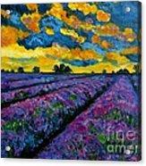 Lavender Fields At Dusk Acrylic Print