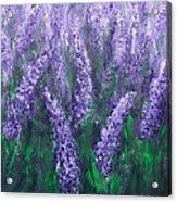 Lavender Garden II Acrylic Print