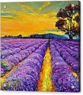 Lavender Acrylic Print by Ivailo Nikolov