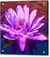 Lavender Lily Acrylic Print