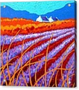 Lavender Meadow Acrylic Print by John  Nolan