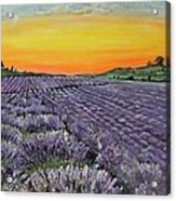 Lavender Oasis Acrylic Print