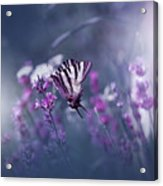 Lavender Queen... Acrylic Print